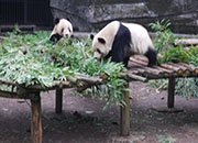 feed Pandas