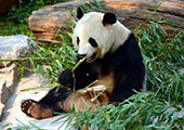 Beijing Zoo